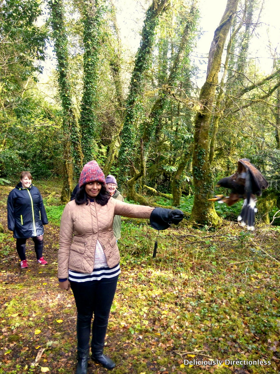 Walking with Hawks at Ashford Castle, Ireland