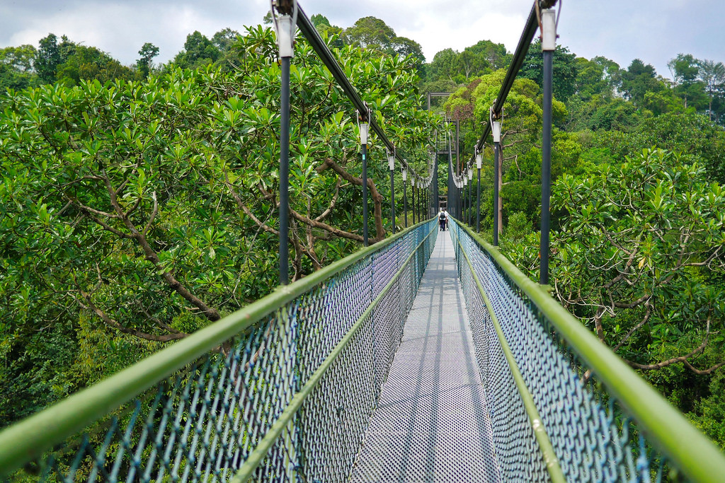 treetop-walk-singapore